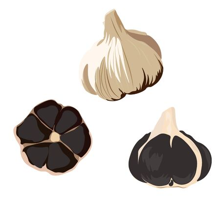 Vector stock illustration of black garlic. Traditional Japanese cuisine. Seasoning for Korean dishes. Delicious vegetable onion with a cross section showing black teeth. Isolated on a white background