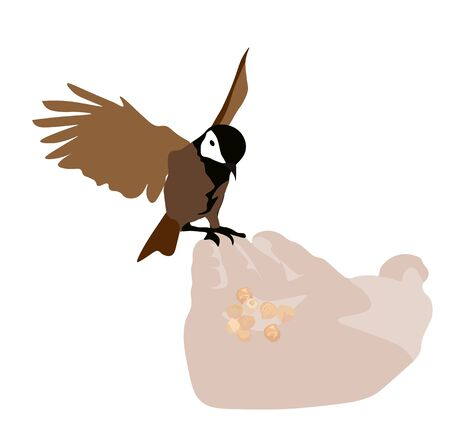 Vector stock illustration of a street bird. Gray Sparrow is a small bird. Feed the Finch with your hand. outdoor recreation. Ornithology. Isolated on a white background.  イラスト・ベクター素材
