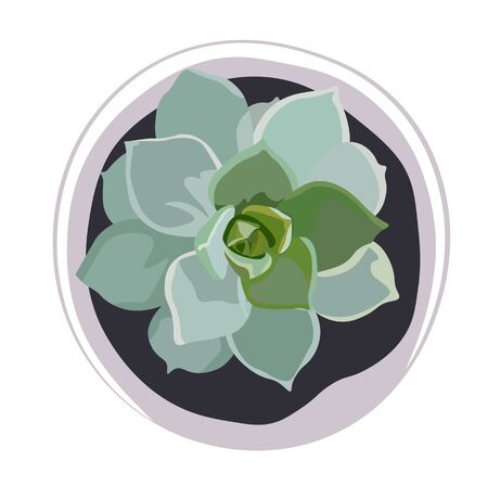 Vector stock illustration of succulent watercolor. Aloe cactus plant isolated on white. Close up of cactus succulent for flower shop design as green background. Close up of potted plant. Flower