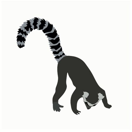 Vector stock illustration of a lemur. Ring-tailed striped funny lazy exotic Madagascar lemur. Little cute Limur catta Asian funny. Cartoon animals for kids. African zoo animal. isolated on white back