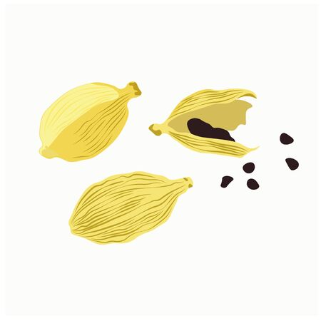 Vector stock illustration of spicy cardamom, grain seeds in close-up isolated on a white background. Seasoning for food. Eastern cuisine. Culinary herbs. The fruits of the plant. ?lettaria cardamomum