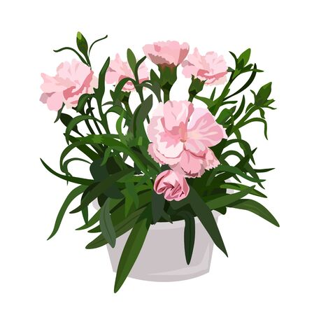 Vector stock illustration of a clove sprig in a pot. Pink flower Bud for a bouquet, watercolor greens. A bouquet of delicate carnations, a spring houseplant. Petals and leaves. Postcard on 8 March. Illustration