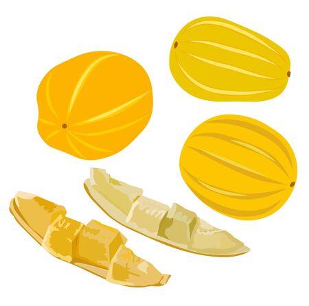 Stock vector illustration of Korean melon chamoe. Small yellow round sugar fruit. Dessert. Sugar Melon pumpkin. Sweet cantaloupe. Fresh muskmelon. Isolated on a white background. Summer vegetable Illustration