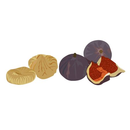 Vector stock illustration of figs. Large purple dried Fig fruit. Sliced slices Eastern dessert. Fructose Isolated on a white background.  イラスト・ベクター素材
