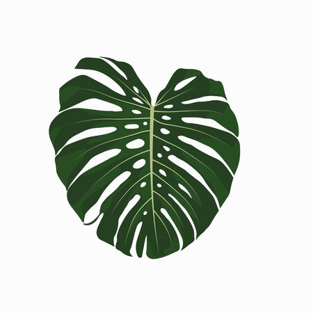 Vector stock illustration of tropical leave. Monstera leave. Watercolor greenery plant. Template for stickers, stencil. Close-up of tropical leaves isolated on a white background. Flat style.