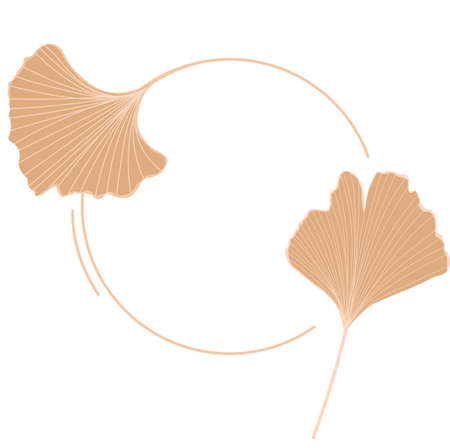 Vector stock illustration of gingko leaf icons for storis. Pastel poster for a wedding invitation. Gentle botany. gingko biloba gold color close-up. Isolated on a white background.