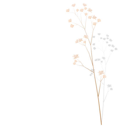 Pampas grass vector stock illustration. Cream branch of dry grass. Panicle Cortaderia selloana South America, feather flower head plumes step. golden color. Template for a wedding card.
