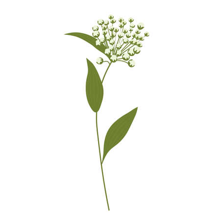 Wild flower vector stock illustration. Spring meadow plant. green stem in the field. Isolated on a white background.