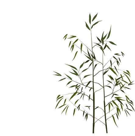 Bamboo vector stock illustration. Young stems and shoots with green leaves of a tropical tree. For spa and cosmetics labels. Wood of a herbaceous Chinese plant. Isolated on a white background.