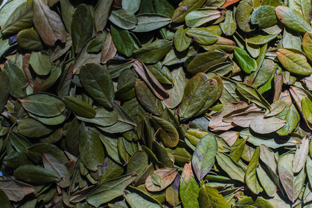 dried leaves of a cowberry close up Stock Photo