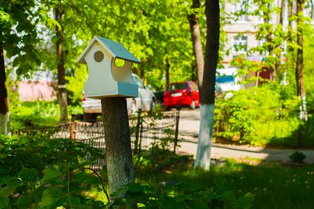 bird feeder in the yard in the spring