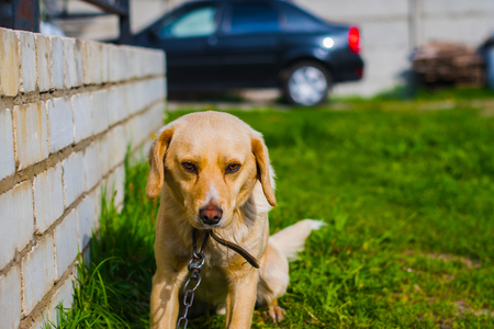 dog guards its territory in the summer Stock Photo