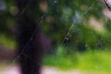 A small thin cobweb on a tree close up