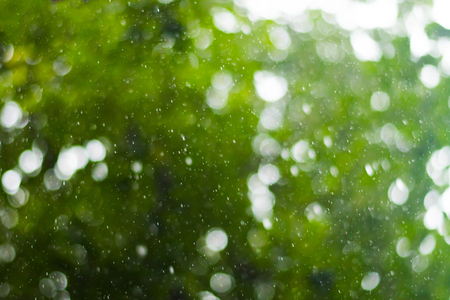 blurred background. Raindrops on a background of green tree Stock Photo
