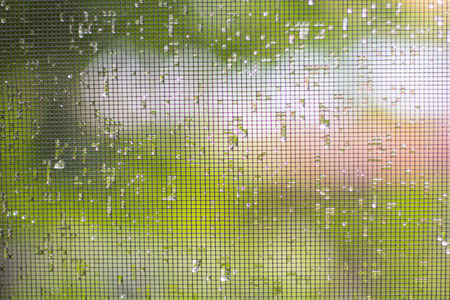 on the mosquito net drops from the rain close-up