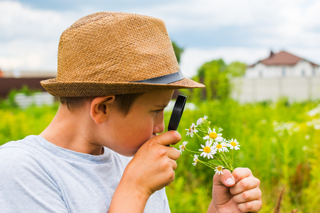 boy in the hat looking at the daisies through a magnifying glass Stock Photo