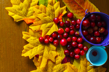 still life with cranberry berries and maple leaves Stock Photo