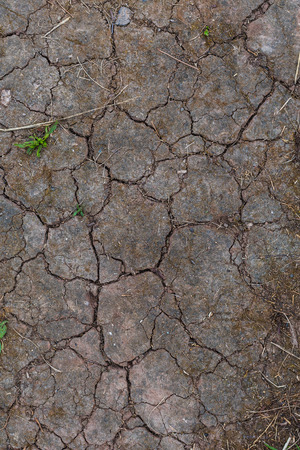 soil with small cracks Stock Photo