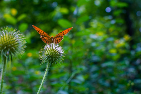 orange butterfly sitting on a plant Stock Photo