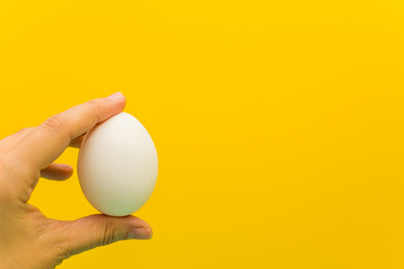 chicken white egg in hand on yellow background