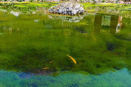 growing fish in the pond