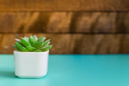 small plant in the interior 版權商用圖片