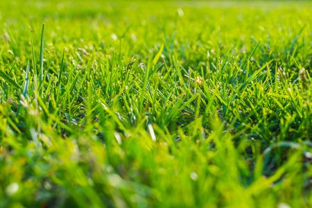 grass close-up. shallow depth of field.