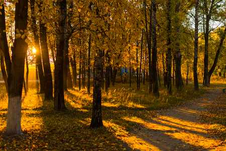 jesienny krajobraz. aleja.