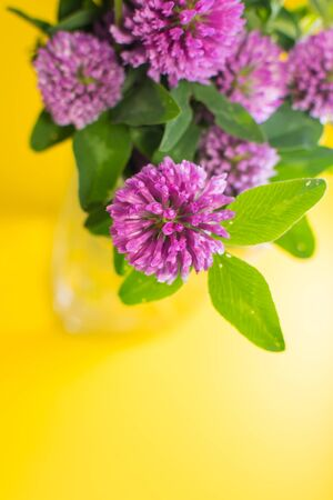 clover flowers on yellow background. vectical.