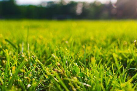 grass at sunset close-up. shallow depth of field