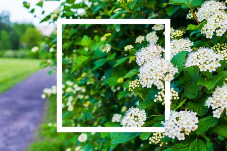 beautiful blooming Bush with square frame Stock Photo