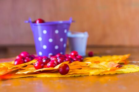 still life with cranberry berries and maple leaves Reklamní fotografie