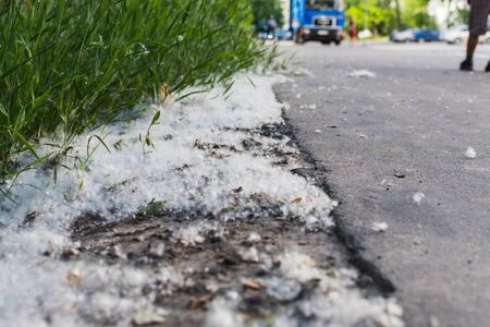 poplar fluff is on the side of the road.