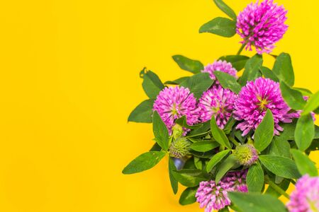 pink clover on yellow background with space for text
