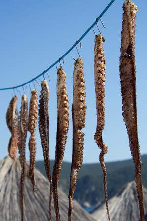 Fresh marinated octopus tentacles hanging out to dry on natural sunlight. Preparing healthy  and tasty seafood.
