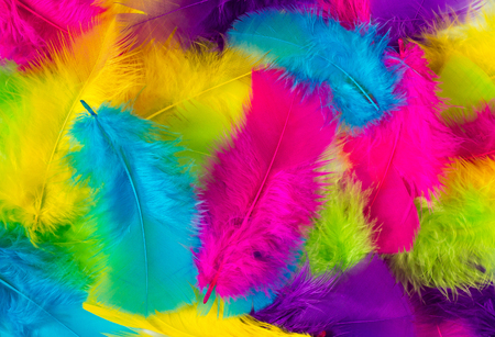 Colorful feather texture background. Flat lay Фото со стока
