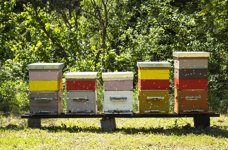 Colorful wooden beehives and bees in apiary near white acacia forest. Apiculture Foto de archivo