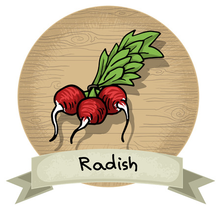 Hand drawn radish icon, with a name and wooden background Vector