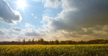coleseed: Field with Coleseed and beautiful sky