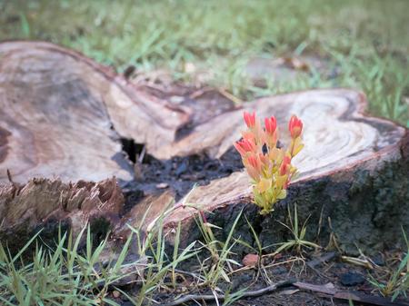 Orange leaves germinate from stumps.