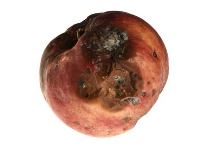 Rotten red apple with holes on white background