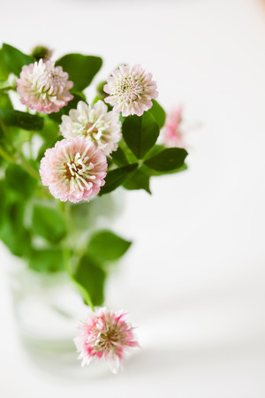 Romantic clover flowers bouquet with leaves on white background, copy space