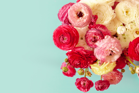 Delicate floral background of pink ranunculus on a blue background flatlay. Romantic background for wedding invitations and greeting cards, place for text, copy space