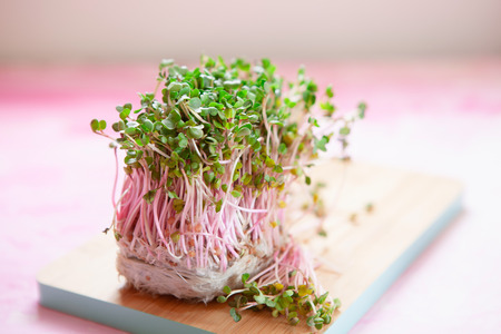 Fresh pink radish sprouts on pink background. Daikon cress close-up with place for text 写真素材
