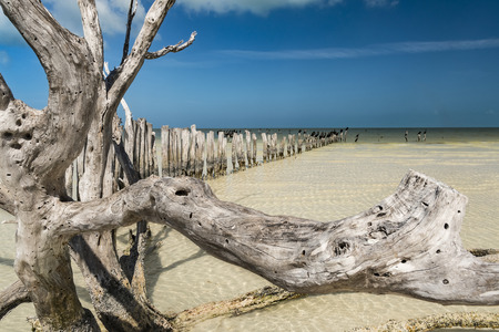 Floater driftwood in front of very shallow sea water in the Gulf of Mexico Stock Photo