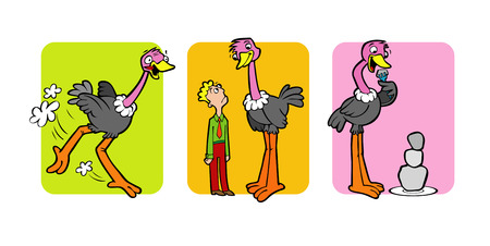 The illustrations shows that the ostrich run fast, taller than human and eats stones, to help him make other food smaller.