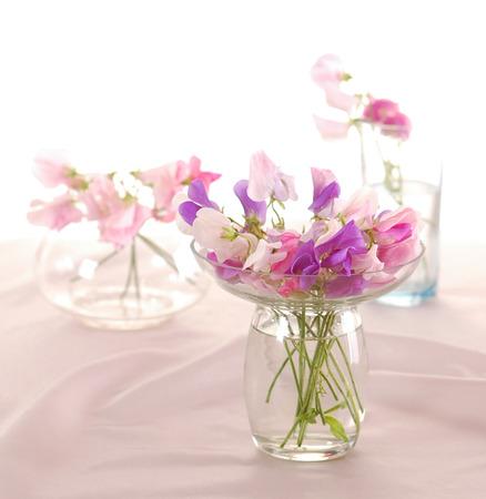 Bouquet of beautiful sweet peas flowers, a studio photo Stock Photo