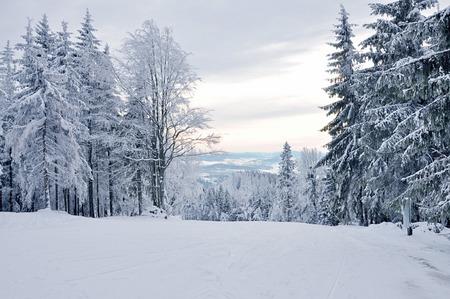 Paesaggio invernale, foresta invernale con gli alberi coperti di neve