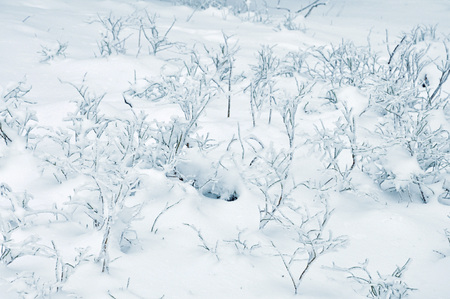 frigid: The branches on a ground coverd with white snow