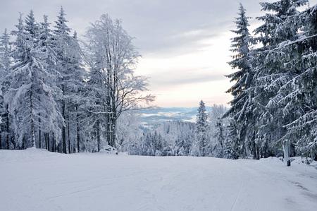 Paesaggio invernale, foresta d'inverno con gli alberi coperti di neve